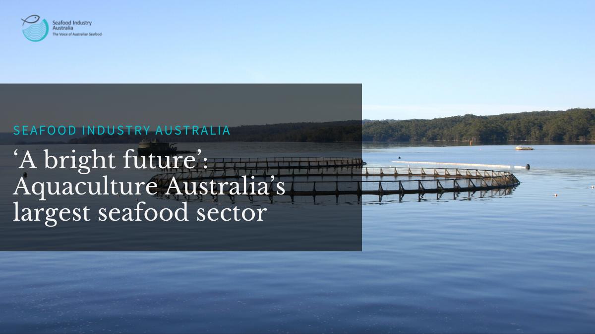 'A bright future': Aquaculture Australia's largest seafood sector