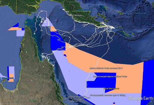 SIA hits back at claims Hawksbill Turtle is under threat from commercial fishing