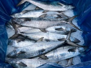 Fishing industry rebuffs misguided attempt to shut iconic Queensland fishery