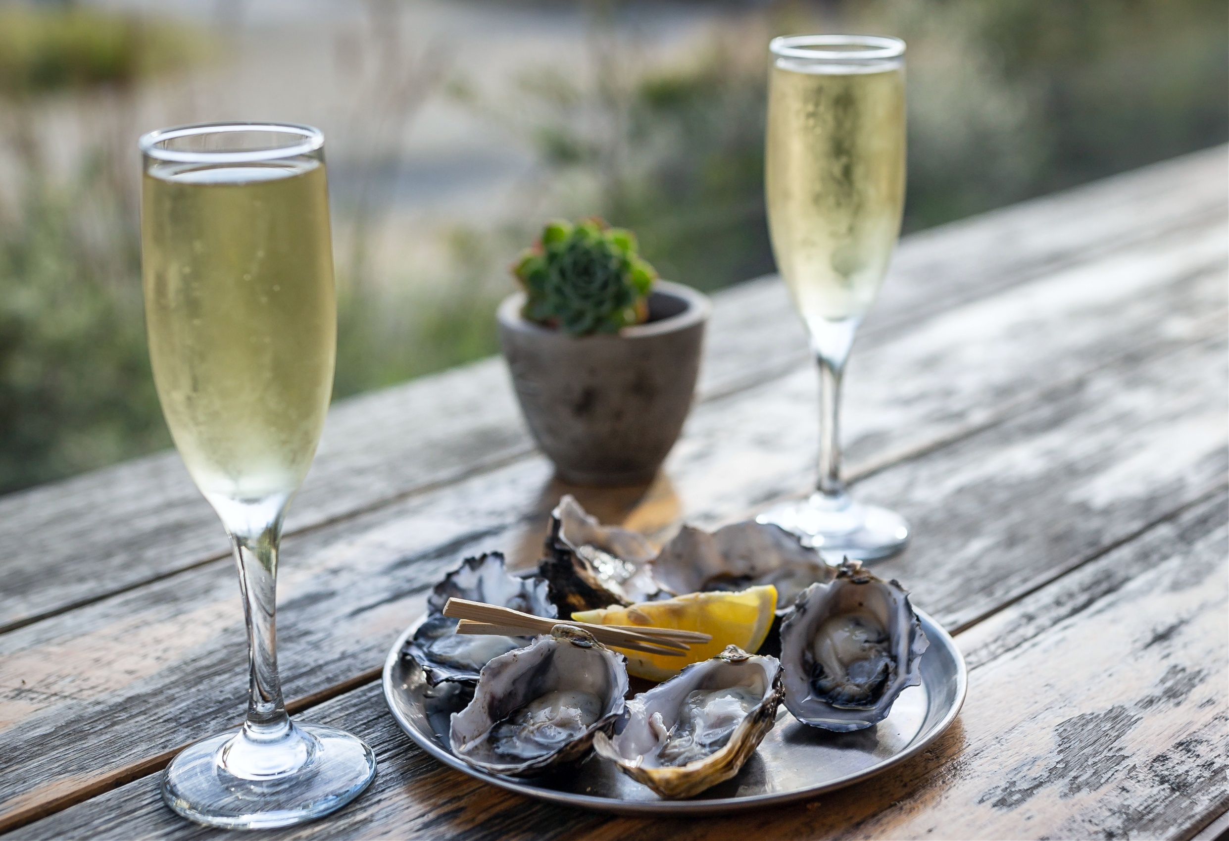 'Say it with seafood': Industry urges lovers to buy Aussie