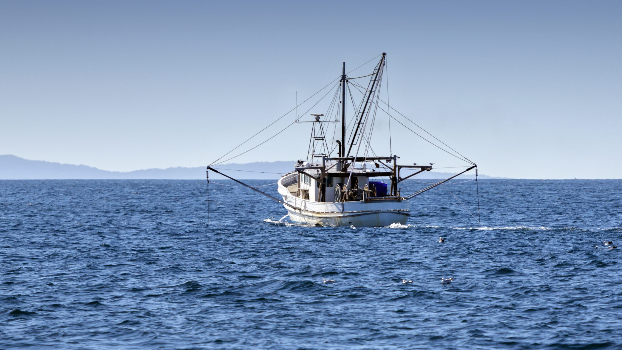 'Unprecedented internationally': Australian seafood given sustainability tick for seventh consecutive year