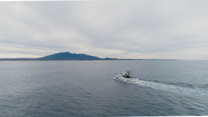 'Our priority is the ocean': Australia's seafood industry welcomes World Oceans Day